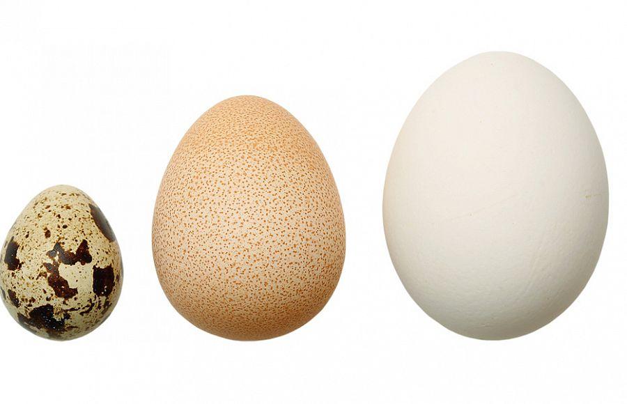 Куриное, индюшиное и перепелиное яйца