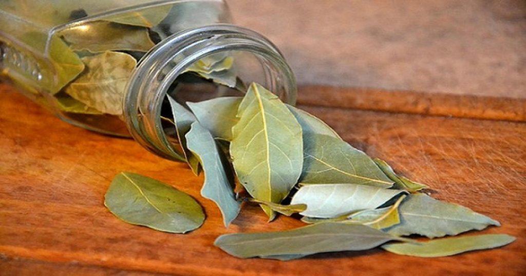 Листья каффирского лайма в стеклянной банке