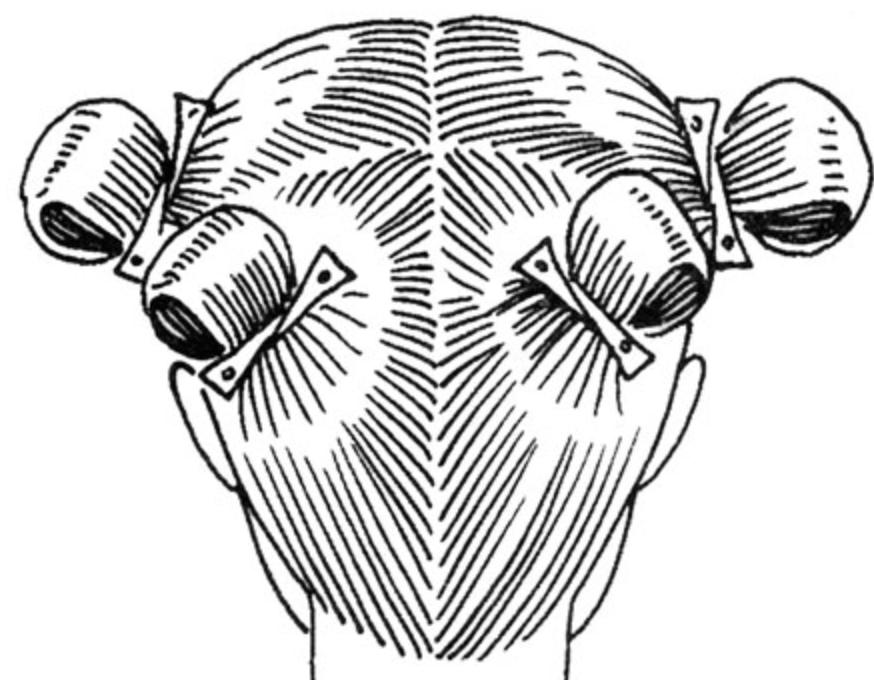 разделение волос на четыре зоны