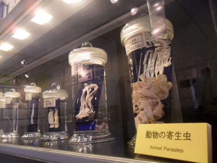 Паразитологический музей