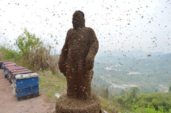 Соревнование по приманиванию пчёл