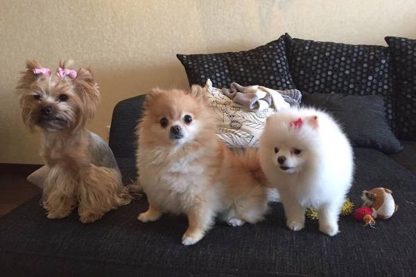Ева, Челси и Лавли