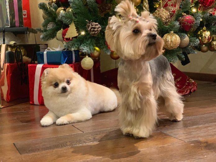 Собаки Бузовой