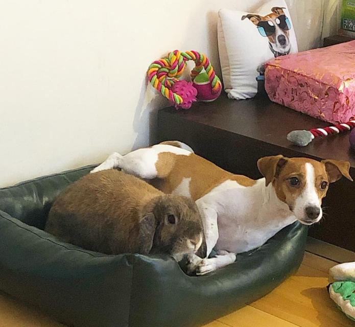 Крольчиха Эльза и собака Джина