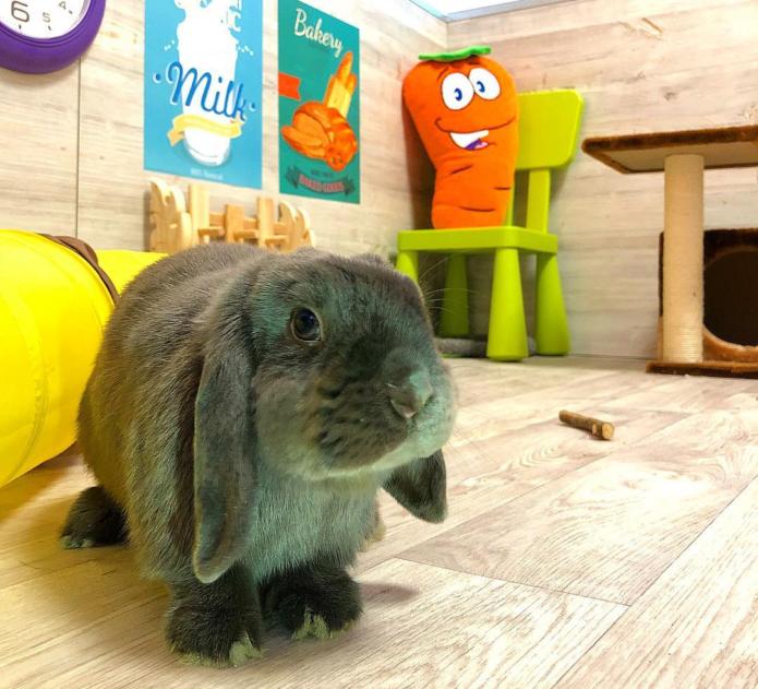 Кролик Лизун