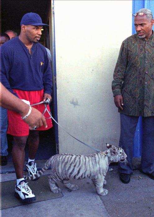 Майк и тигрёнок