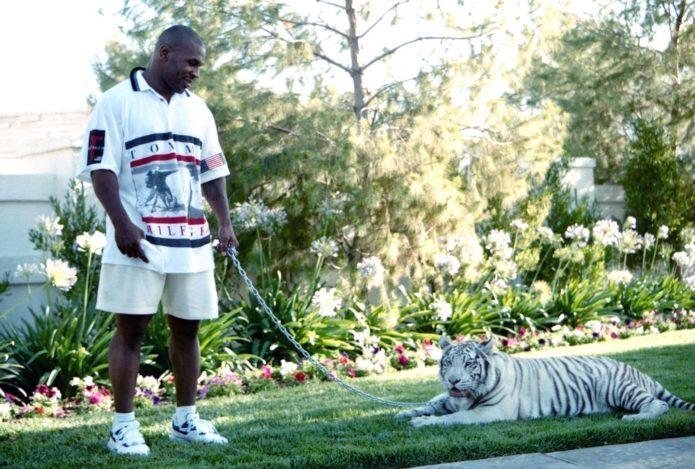 Майк и новый тигр