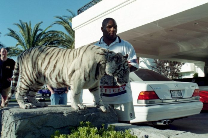 Тигры гуляют, где хотят