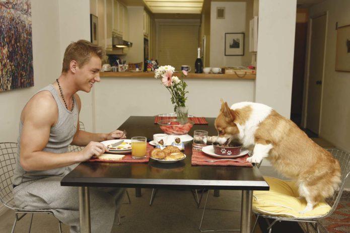Воробьев и его собака