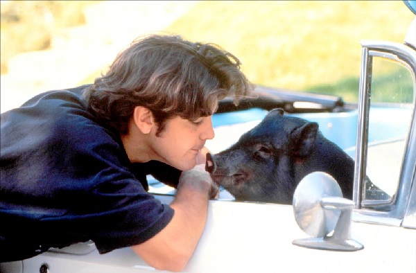 Джордж Клуни со свиньёй