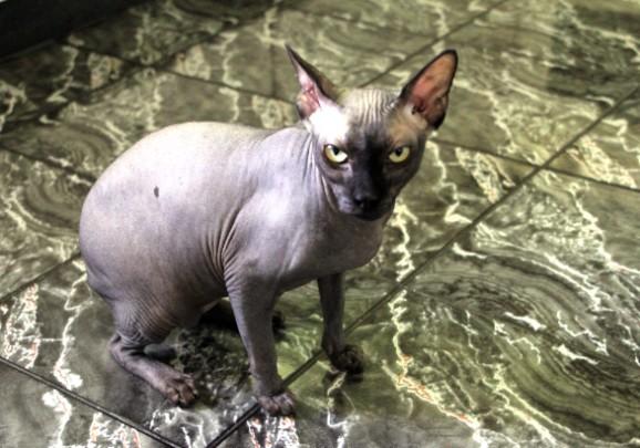 Арни — кот Бари Алибасова