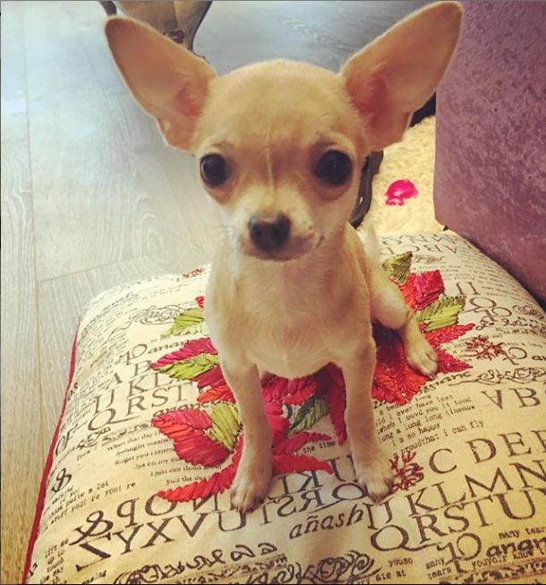 Собака Анны Семенович