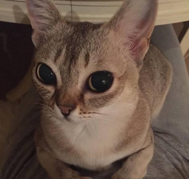 Огромные глаза Оськи