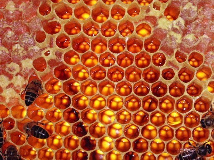 Пчелиный мёд в сотах