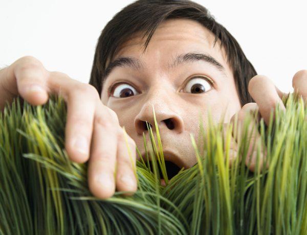 испуганный мужчина и трава