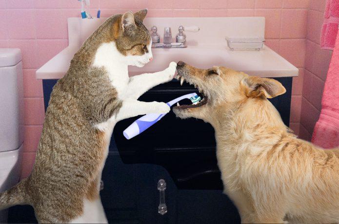 Кошка чистит зубы собаке
