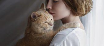Девушка обнимает персикового кота