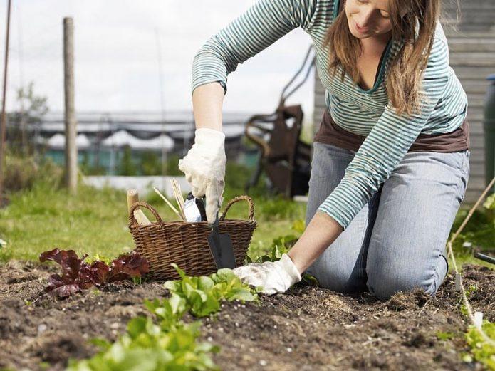 Женщина работает в огороде