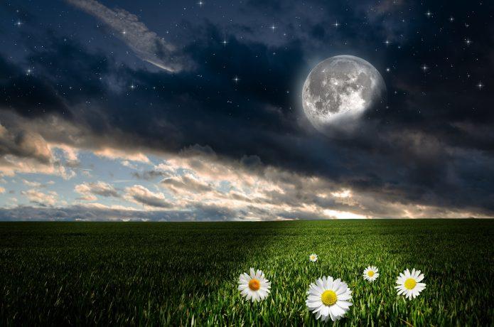 полная луна, трава, ромашки, небо
