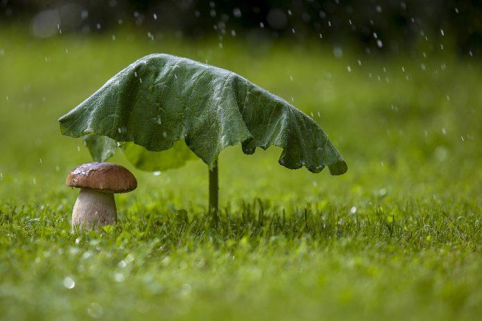 Гриб и лист лопуха под дождём