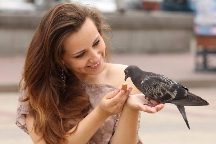 девушка корпит голубя с руки