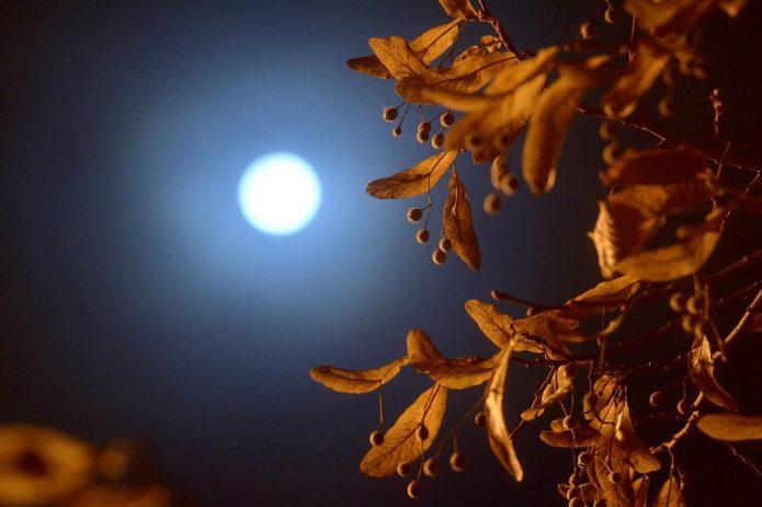 полная луна, ночное небо, осенняя листва