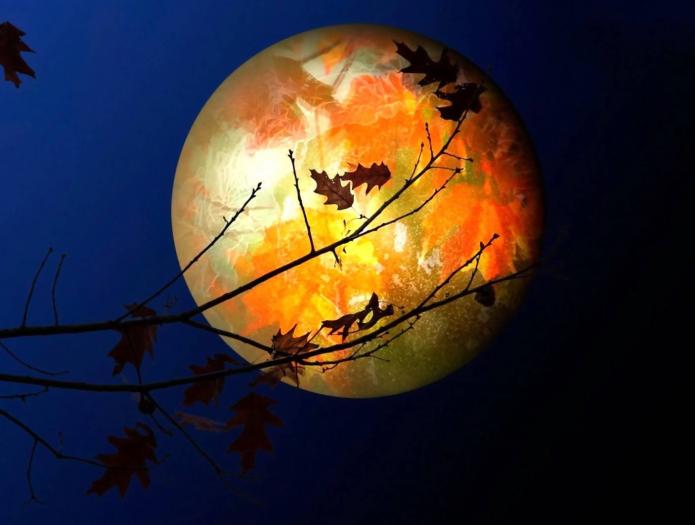 полная луна в осенних листях, ночное небо