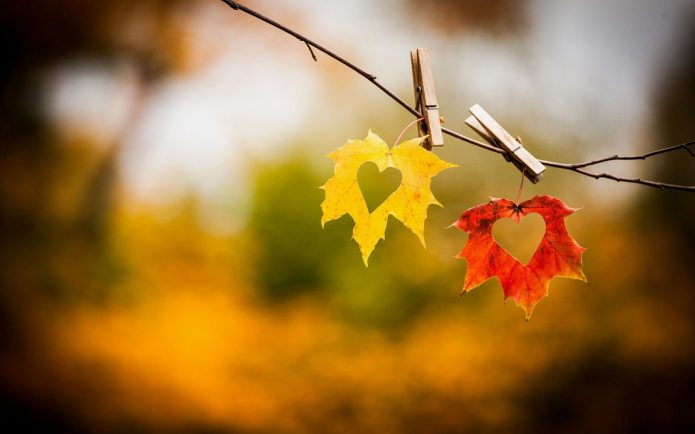 два сердца на кленовых листьях