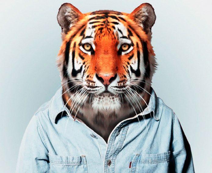 Тигр в мужской рубашке