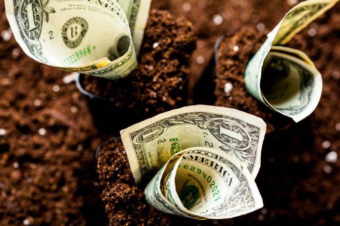 доллары в земле