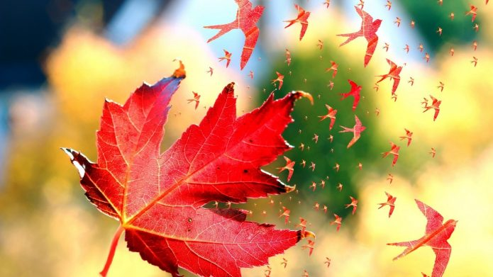 красный кленовый лист, ласточки