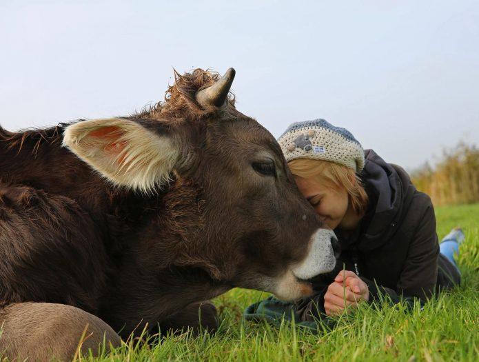 Бык и девушка