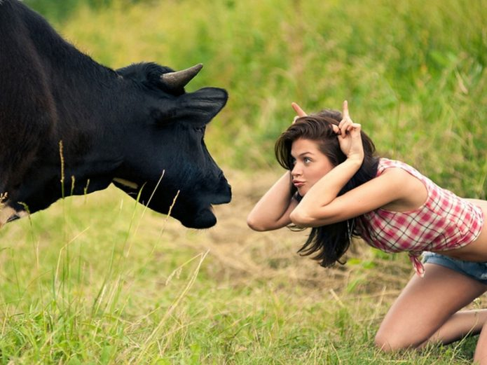 Девушка изображает быка рядом с коровой