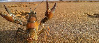 Рак на берегу моря