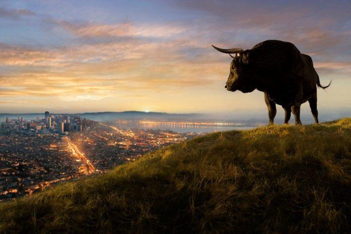 Бык смотрит на город с высоты