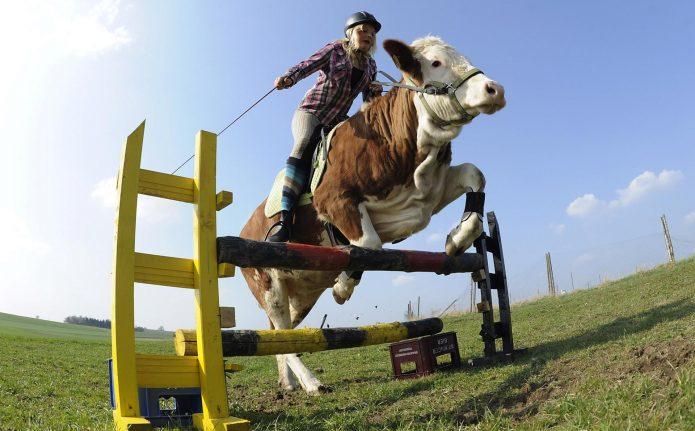 Девушка скачет на быке