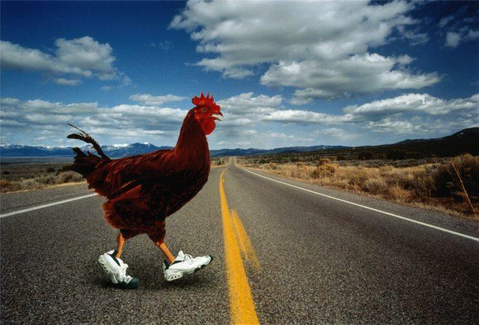 Петух в кроссовках на дороге
