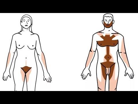 Участки роста волос у женщин и мужчин