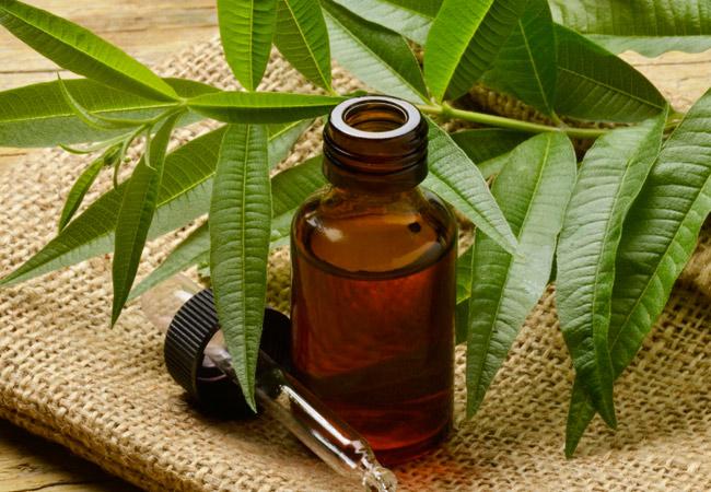 Пузырёк с маслом, пипетка и ветка чайного дерева
