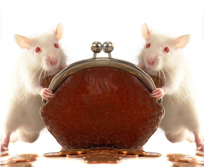 Две крысы с кошельком