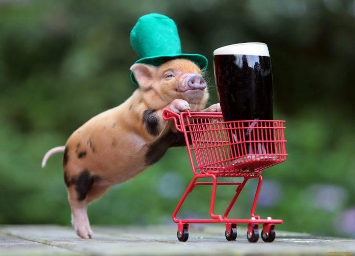 Поросёнок в ирландской шляпе везёт тележку с бокалом пива