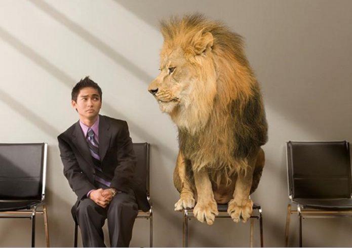 Лев и мужчина сидят на стульях в приёмной