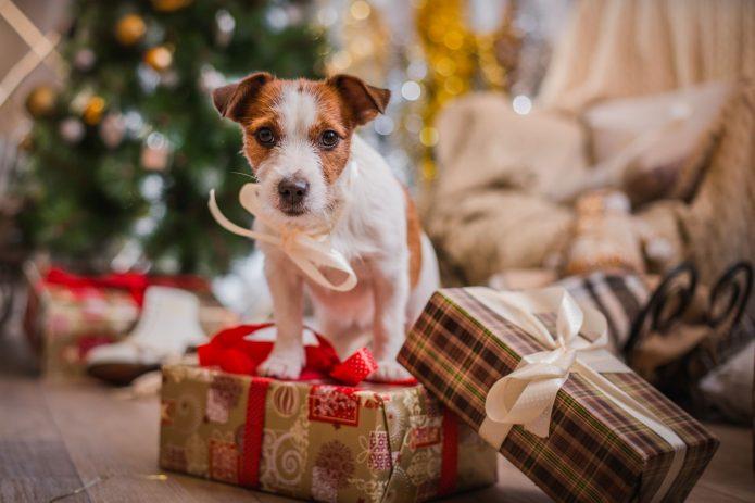 собака, новогодние подарки, ёлка