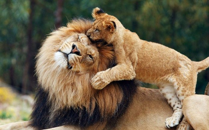 Лев со львёнком