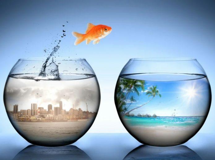 Рыбка перепрыгивает из аквариума в аквариум