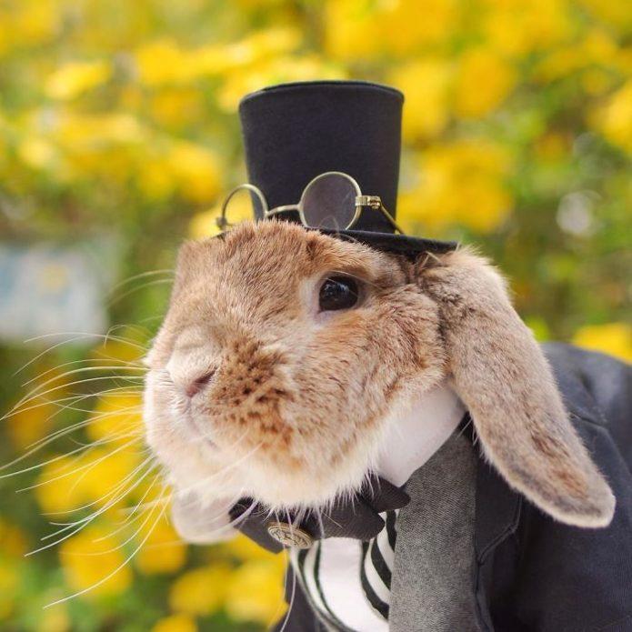 кролик-джентльмен, цветы