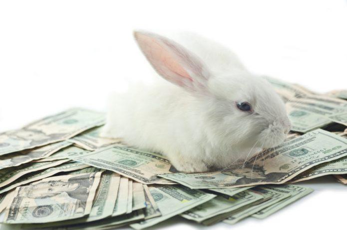 белый кролик лежит на купюрах, белый фон