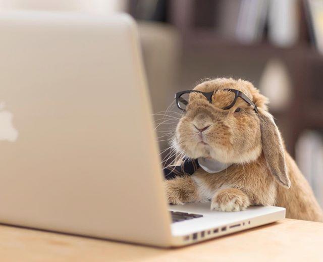 кролик в очках за ноутбуком