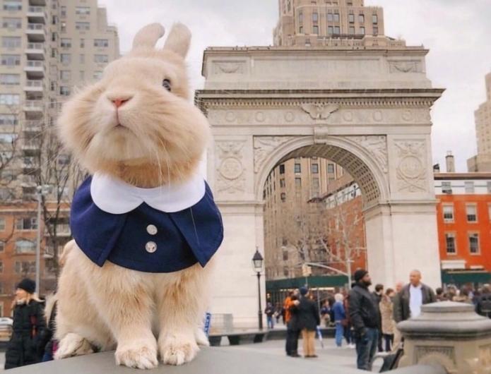 путешествующий кролик в костюмчике, городская достопримечательность