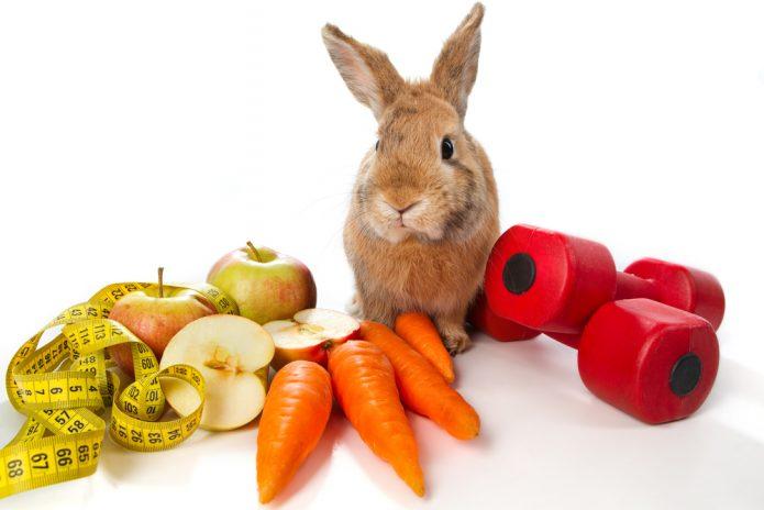 кролик, яблоки и морковь, гантели, белый фон